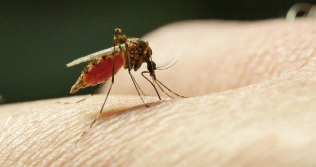 उदयपुरको तराई क्षेत्रमा डेङ्गु रोग फैलन थाल्यो