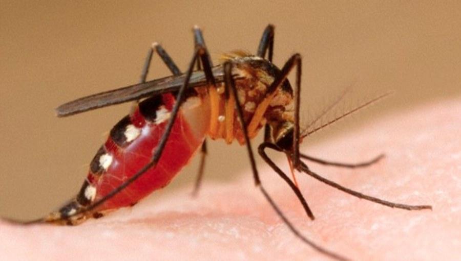 डेंगुबाट ८ हजार ९० जना संक्रमित