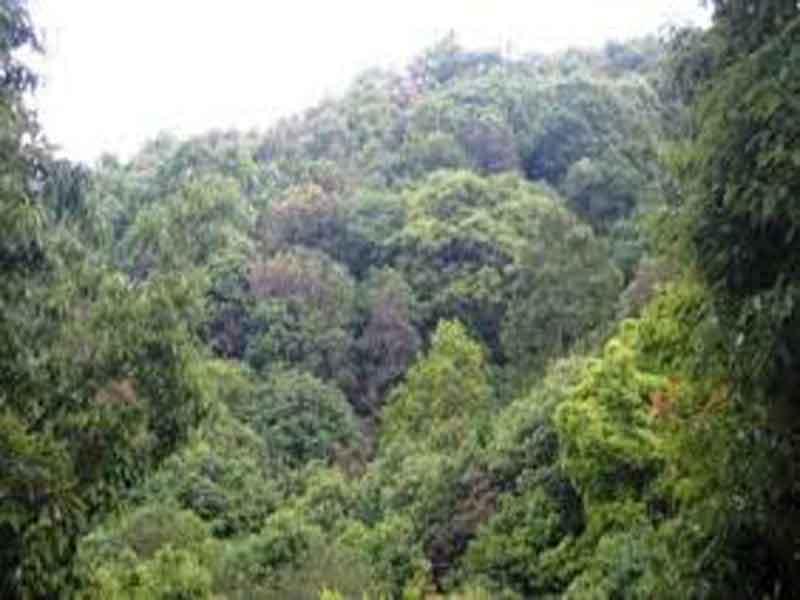 करको मारमा सामुदायिक वन, आन्दोलनको तयारी