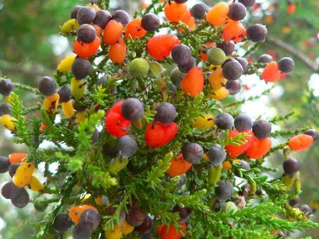 विचित्र संसार : एउटै रुखमा ४० प्रकारका स्वादिष्ट फल