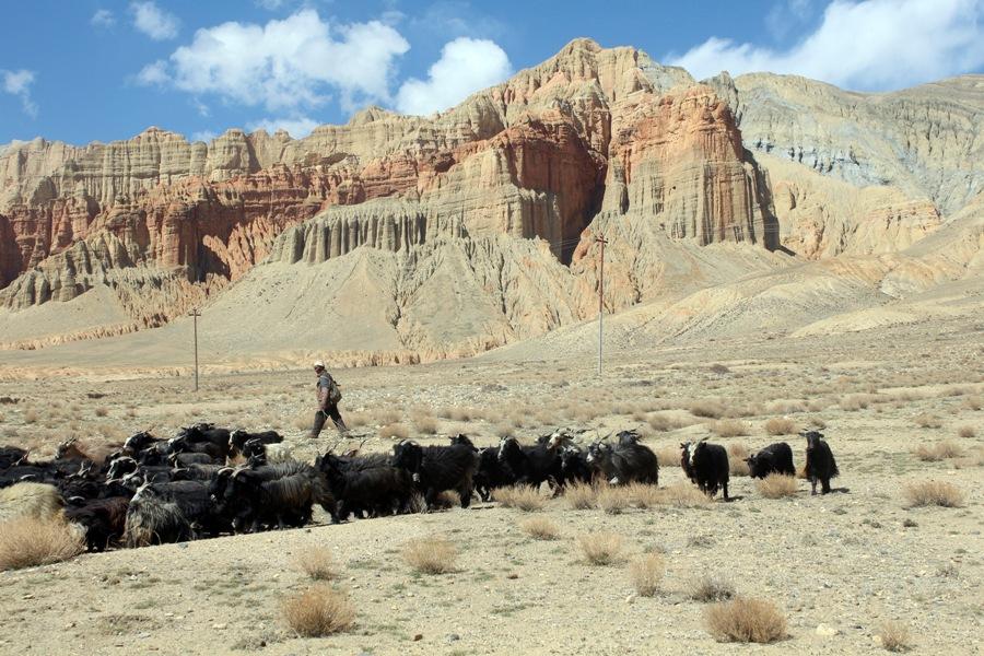 ढाक्मर पहाडको पृष्ठभूमि घमीमा चर्दै गरेका च्याङ्गा