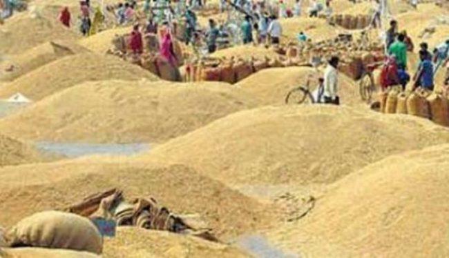 धान उत्पादनमा कमीः किसान आर्थिक मारमा