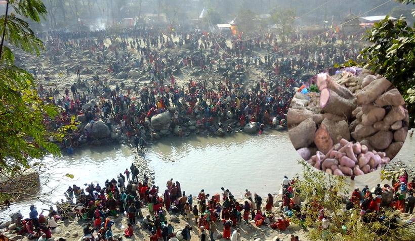 संक्रान्ति जात्रा,  गङ्गा स्नान र कन्दमुल