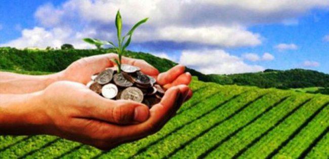 विदेशबाट फर्केपछि सामूहिक कृषि व्यवसायमा रमाउँदै युवा