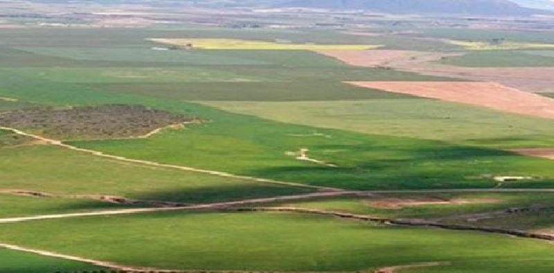रोपाइँ गर्न नपाएपछि महोत्तरीका किसान निराश