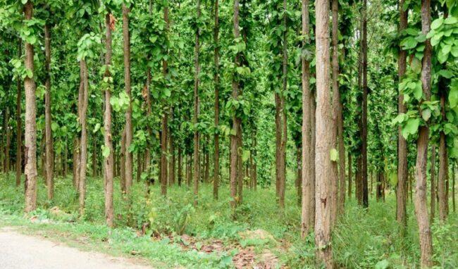 वन संरक्षण तथा व्यवस्थापन गर्न सरकारलाई आग्रह