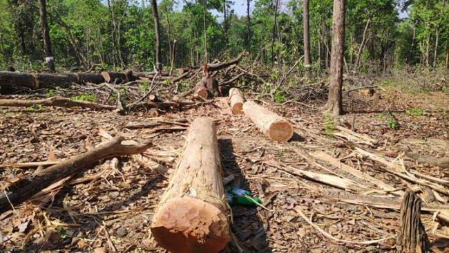 वन फँडानीबारे संसदीय टोलीद्वारा छानबिन शुरु