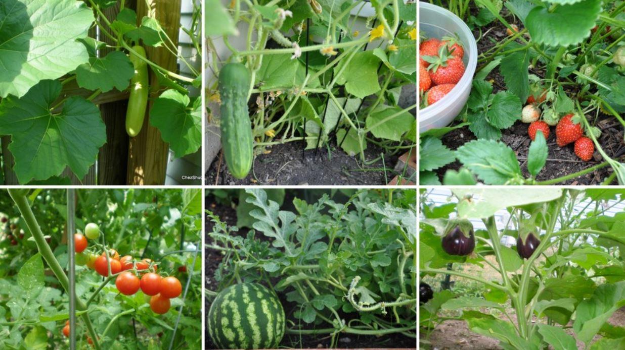कृषि उत्पादन अन्तर्राष्ट्रिय बजारमा पुर्याइने