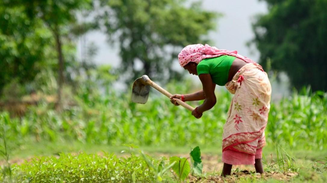 कोरोनाले नेपालको कृषि क्षेत्र धराशायी