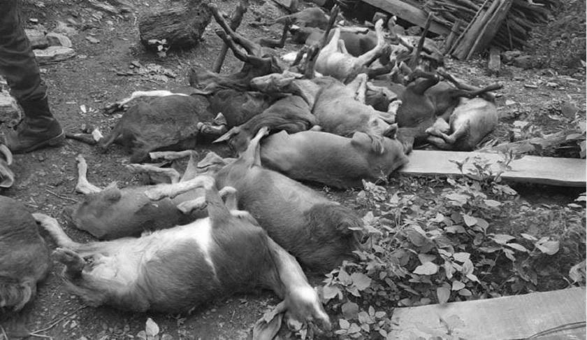 फैलियो पिपिआर : १५ दिनमा ६१ बाख्रा मरे
