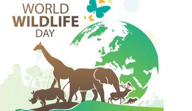 विश्व वन्यजन्तु दिवसमा नदी किनार सरसफाइ
