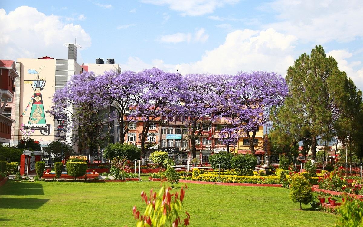 जाकाराण्डाको फुल