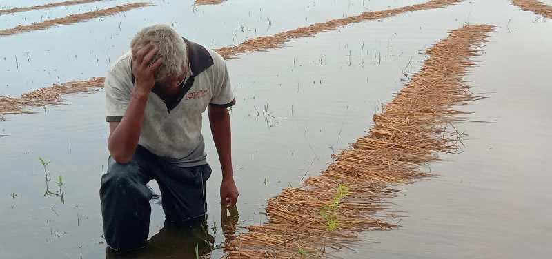 कोसीमा पानीको बहाव बढ्दैः राजविराज जलमग्न